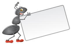 Message from ant. Ant bring blank card for your message Stock Photos