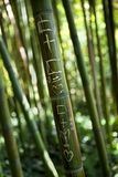 Message on a bamboo Royalty Free Stock Photos