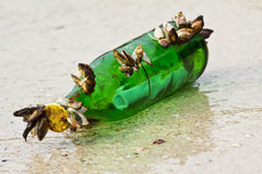 Message in the bottle Stock Photography