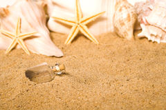 Message in a Bottle. A message in a bottle buried in the sand at the beach Royalty Free Stock Images