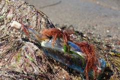 Message in a bottle on the beach. Covered with Seaweed royalty free stock photos