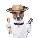 Message in a bottle dog. With hat royalty free stock photos