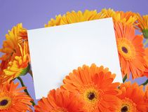 Message in a bouquet of flowers Stock Photography