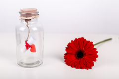 Message d'amour dans une bouteille Le rouleau de livre blanc avec le fil rouge et le gerbera rouge fleurissent sur un fond blanc  Photographie stock libre de droits
