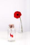 Message d'amour dans une bouteille Le rouleau de livre blanc avec le fil rouge et le gerbera rouge fleurissent sur un fond blanc  Images libres de droits