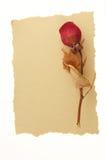 Message d'amour de cru. Images libres de droits