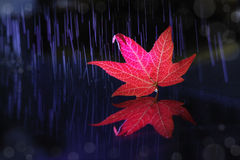 Message d'automne Image stock