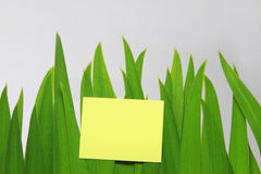 Message in green grass Royalty Free Stock Images