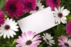 Message parmi des fleurs Photographie stock