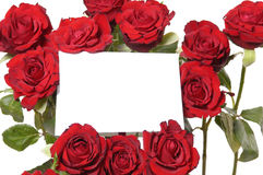 Message on red roses Royalty Free Stock Photo