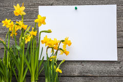 Message and spring daffodils Royalty Free Stock Photo