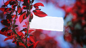 Message in a tree. A torn white piece of paper hanged on the branch of a tree Royalty Free Stock Photos