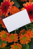 Messaggio del fiore Fotografia Stock