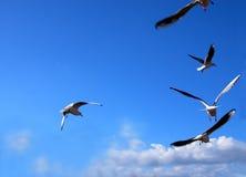 Messaggio di volo fotografia stock libera da diritti