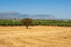 Messara plain. Crete, Greece Royalty Free Stock Photo