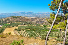Messara plain. Crete, Greece Royalty Free Stock Photos