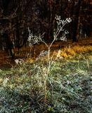 Messenger winter. Illustrations,snow landscape,forest royalty free stock image
