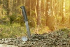 Messer, Kompass und Feuerstein auf dem Stumpf im Wald stockbild