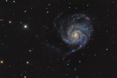 Messier 101 lub Pinwheel galaxy w gwiazdozbioru Ursa Ważnym brać z CCD kamerą i średnim ogniskowej długości teleskopem Zdjęcia Stock