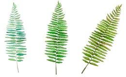 Messo con le foglie della felce su un fondo bianco illustrazione di stock
