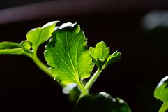 Messy leaf stock photography