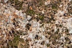 Messy organic texture Stock Photo