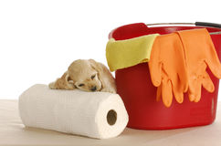 Messy puppy Stock Photo