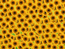 Messy sunflower background Stock Photos