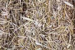 Messy Thatch Royalty Free Stock Images