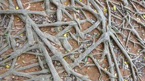Messy tree roots background illustration royalty free stock photos