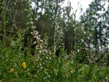Mest bra naturblommor av jord Fotografering för Bildbyråer