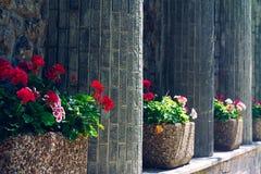 Mest bra sikt av stenväggen och den röda blomman Royaltyfri Foto