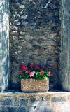 Mest bra sikt av stenväggen och den röda blomman Royaltyfri Bild