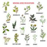 Mest bra växt- boter för halsbränna royaltyfri illustrationer