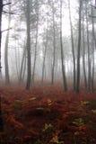 mest florest Royaltyfria Bilder