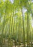 Mest forrest bambu Royaltyfri Fotografi