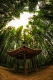 Mest forrest bambu Arkivfoton