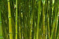 Mest forrest bambu Royaltyfri Bild