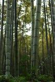 Mest forrest bambu Royaltyfria Foton