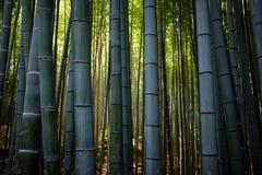 Mest forrest bambu Arkivfoto