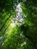 Mest forrest bambu Arkivbild