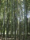 Mest forrest bambu Royaltyfria Bilder