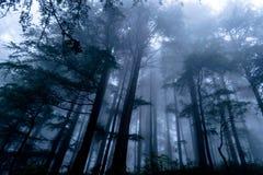 Mest forrest dimmigt berg Royaltyfri Fotografi