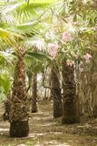 Mest forrest palmträd - fritid Royaltyfri Bild