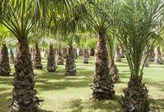 Mest forrest palmträd - fritid Arkivbild