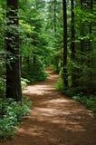mest forrest trail Royaltyfria Foton