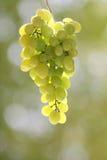 mest grapest green för grupp Royaltyfri Fotografi