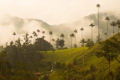 Mest högväxt palmträd i världen i den Cocora dalen Arkivfoto