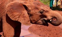 Mest lycklig elefant någonsin! arkivbild