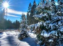 mest wonderforest vinter Royaltyfri Bild